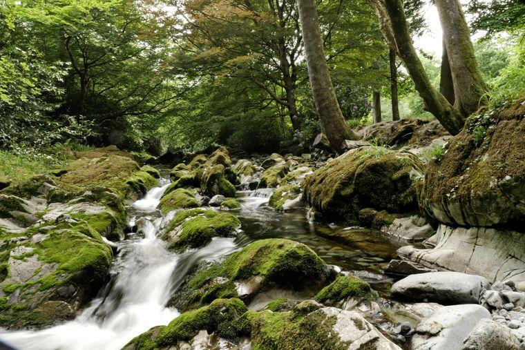 Der Tollymore Forest Park ist der älteste staatliche Waldpark in Nordirland.