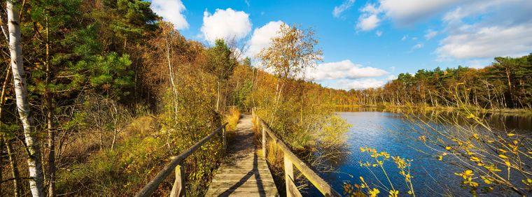 Der wunderschöne Müritz-Nationalpark-Weg in Mecklenburg-Vorpommern.