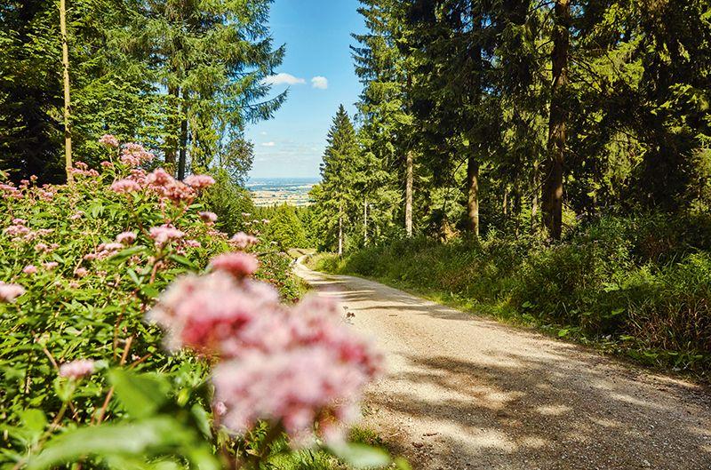 Blühende Pflanzen entlang der Wanderwege