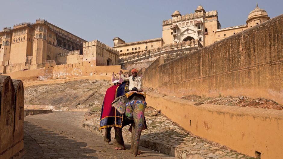 Ein Reitelefant für Touristen vor dem Amber Fort in Rajasthan in Indien