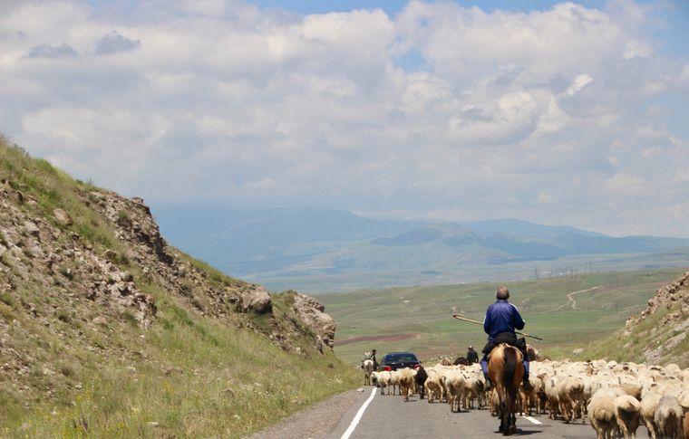 Die Schafherden in Armenien werden von berittenen Hirten begleitet.