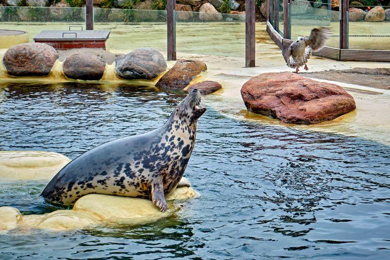 Die Seehundstation ist die Hauptattraktion in Friedrichskoog.