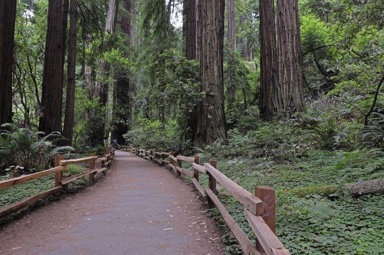 Der Redwood-Nationalpark in Kalifornien war in Episode VI zu sehen. Dort wurden die Szenen für den Waldmond Endor, auf dem die Ewoks leben, und für die Siegesfeier, nachdem der Todesstern vernichtet wurde, gedreht.