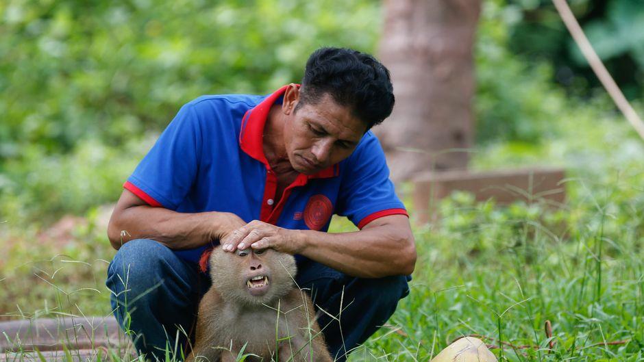 Affe und Besucher in Thailand.