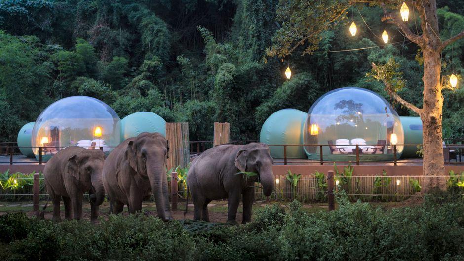 Schlafen, während Elefanten vorbeilaufen: Die Dschungel-Bubble-Suiten in Thailand.