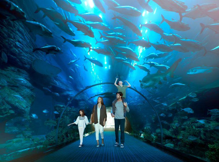 In der Dubai Mall befindet sich ein riesiges Aquarium mit 35.000 Meeresbewohnern. Besucher können die Unterwasserwelt aus einem begehbaren Tunnel heraus hautnah erleben.
