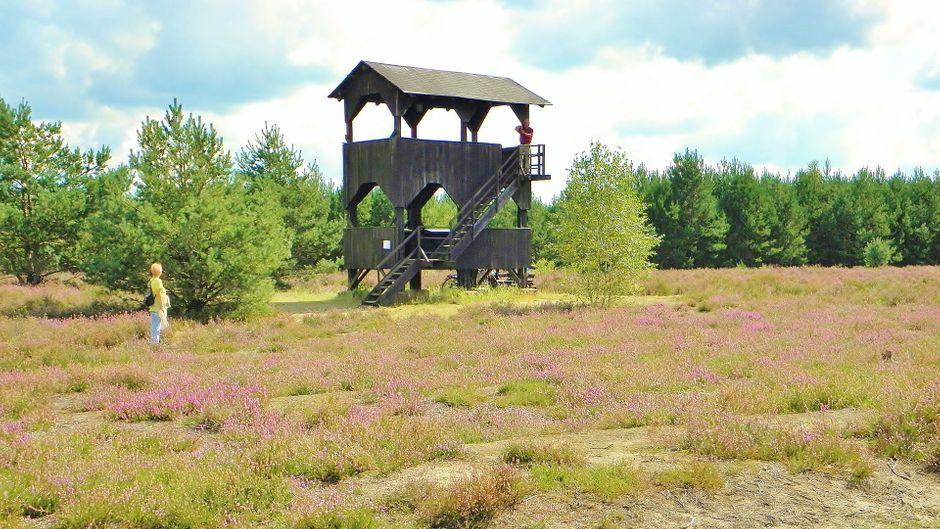 Das Wandern durch die schönen Wälder und Landschaften Brandenburgs ist besonders an warmen Tagen ein netter Zeitvertreib. Auf einem Aussichtsturm kannst du die Umgebung aus der Vogelperspektive betrachten.