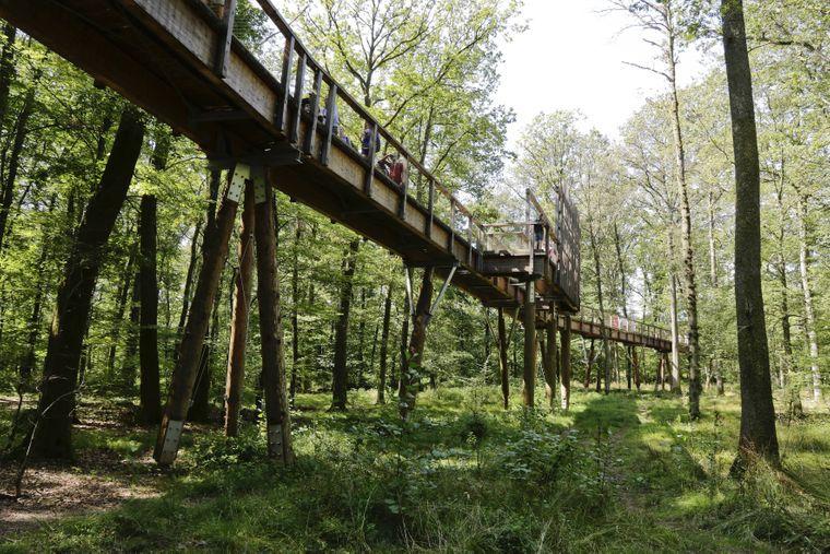 Der Baumwipfelpfad Saarschleife schlängelt sich auf circa 1250 Meter durch einen Wald.