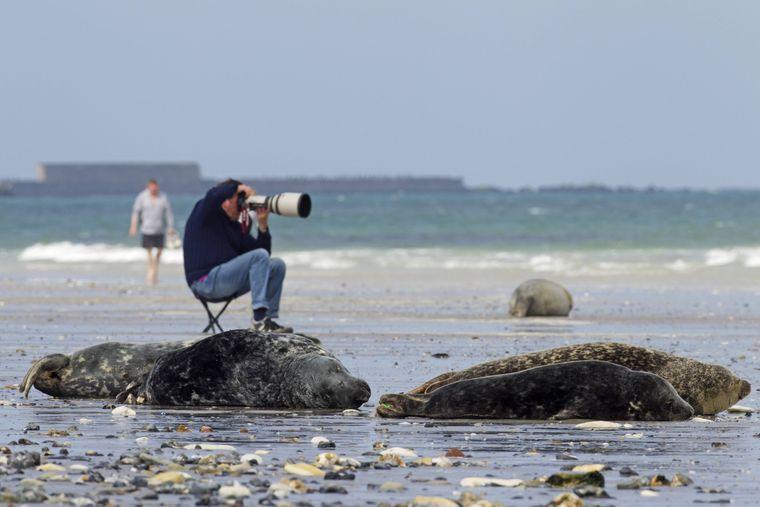 Der Natur-Fotograf braucht für seine Aufnahmen ein besonders langes Teleobjektiv, um die scheuen Tiere vor die Linse zu bekommen.