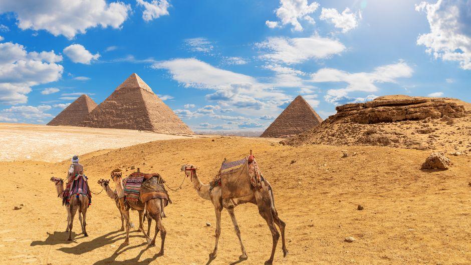 Kamele warten vor den Pyramiden von Gizeh in Ägypten.