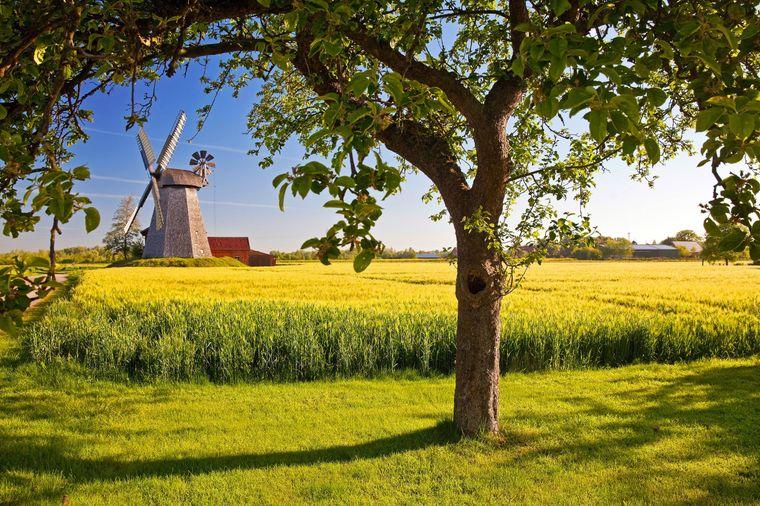 In der Nähe von Bonn befindet sich das größte Obst- und Gemüseanbaugebiet in Nordrhein-Westfalen.