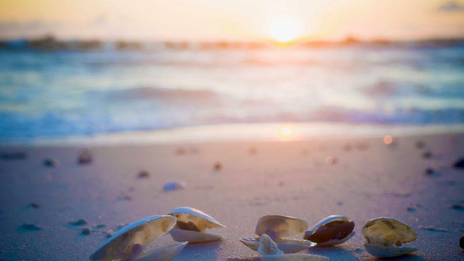 Muscheln am Sandstrand der Ostsee in Mecklenburg-Vorpommern