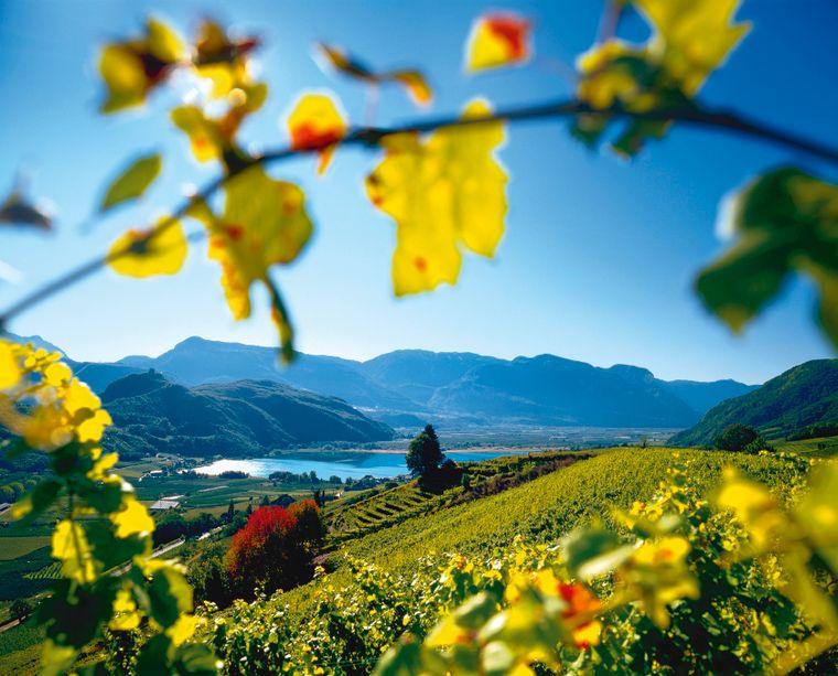 Die sonnigen Weinberge im Süden des Landes rund um den Kalterer See bieten Gästen und Einheimischen zur Herbstzeit Ruhe und Genuss.IDM Südtirol/Clemens Zahn